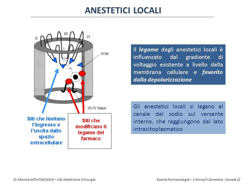 ANESTETICI LOCALI Gli anestetici locali si legano al canale del sodio sul versante interno, che raggiungono dal lato intracitoplasmatico Il legame deg