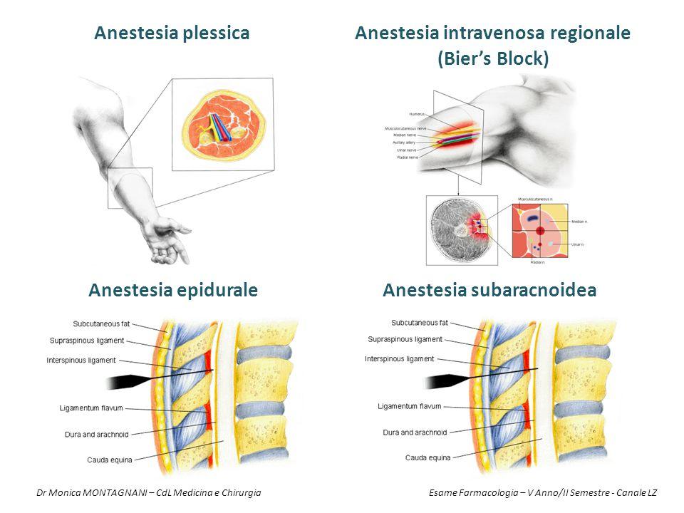 Anestesia plessica Anestesia epiduraleAnestesia subaracnoidea Anestesia intravenosa regionale (Bier's Block) Dr Monica MONTAGNANI – CdL Medicina e Chi