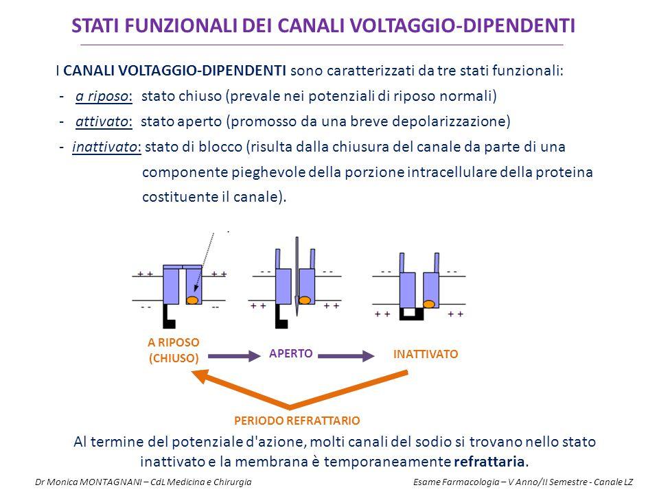 I CANALI VOLTAGGIO-DIPENDENTI sono caratterizzati da tre stati funzionali: - a riposo: stato chiuso (prevale nei potenziali di riposo normali) - attiv