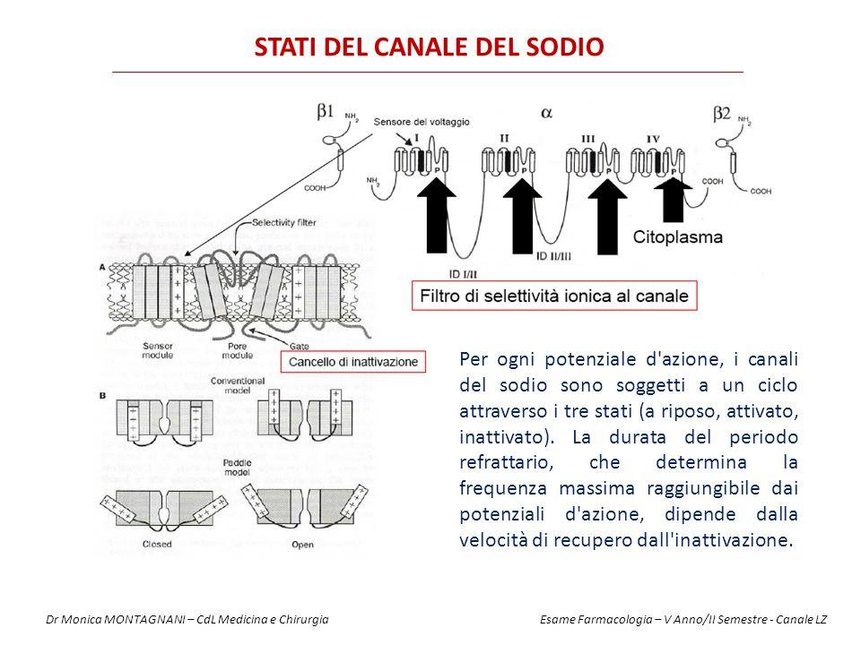 Tipo di fibraFunzione Diametro (mm) Sensibilità Tipo A Alpha Beta Gamma Delta Propriocezione Moto Tocco, Pressione Fusi muscolari Dolore, Temperatura 12-20 5-12 3-6 2-5 + ++ ++ +++ Tipo B Pregangliare Autonomo < 3++++ Tipo C Radice dorsale Simpatico Dolore Postgangliare 0.4-1.2 0.3-1.3++++ DIFFERENTE SENSIBILITA' DELLE FIBRE AGLI ANESTETICI LOCALI Dr Monica MONTAGNANI – CdL Medicina e Chirurgia Esame Farmacologia – V Anno/II Semestre - Canale LZ