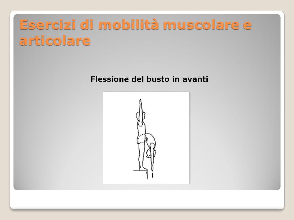 Esercizi di mobilità muscolare e articolare Flessione del busto in avanti