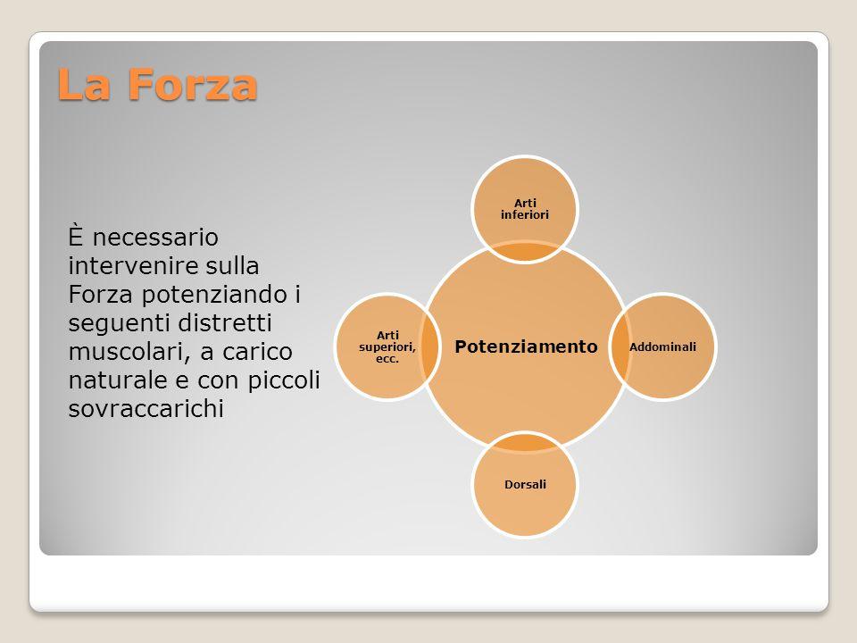 La Forza È necessario intervenire sulla Forza potenziando i seguenti distretti muscolari, a carico naturale e con piccoli sovraccarichi Potenziamento