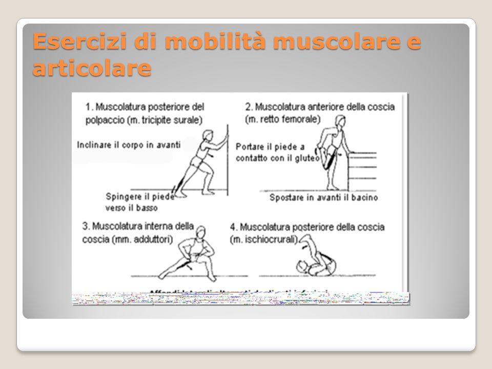 Muscolatura della schiena