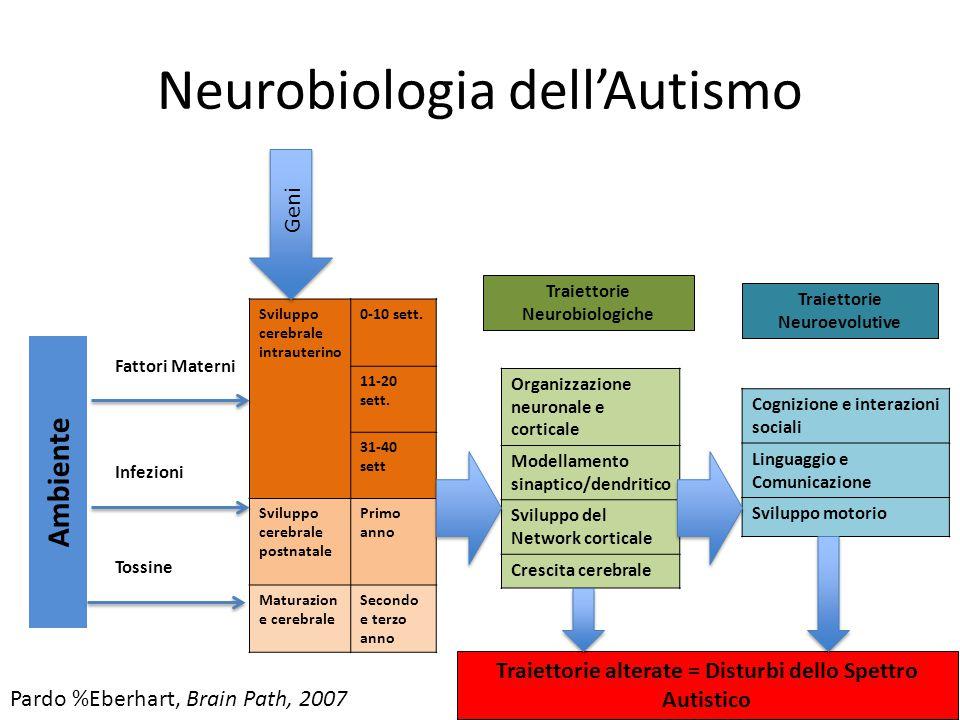 Neurobiologia dell'Autismo Sviluppo cerebrale intrauterino 0-10 sett. 11-20 sett. 31-40 sett Sviluppo cerebrale postnatale Primo anno Maturazion e cer