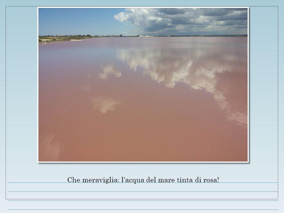 Che meraviglia: l'acqua del mare tinta di rosa!