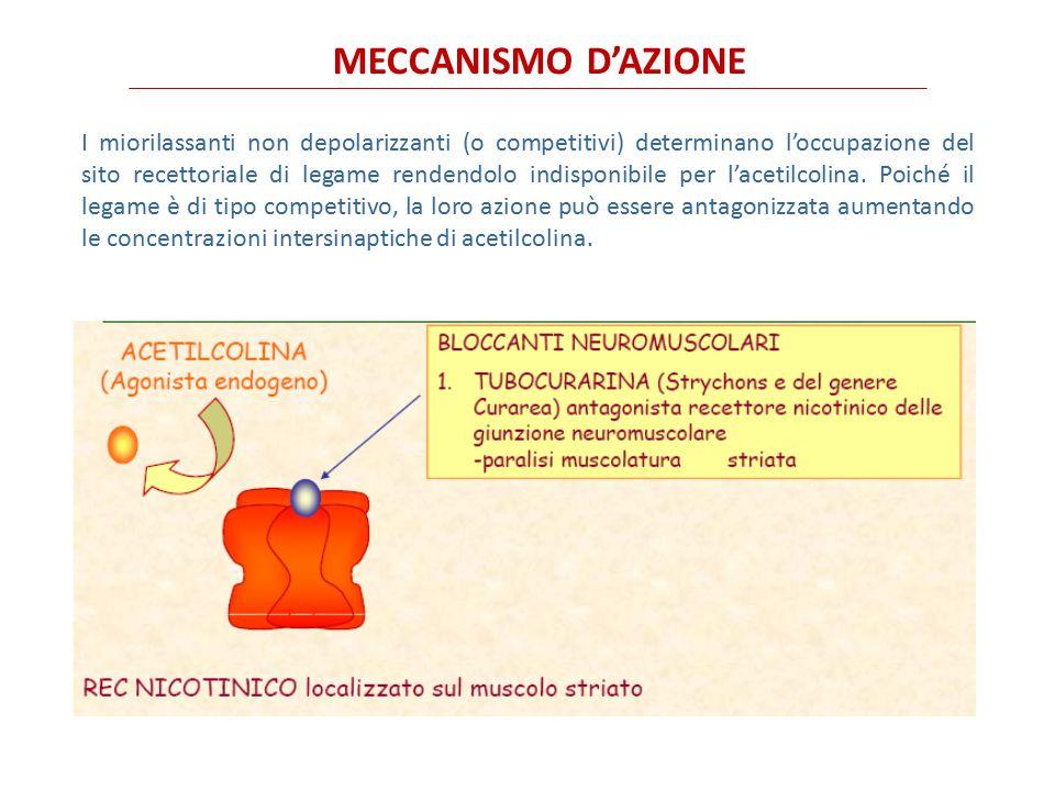 MIORILASSANTI non depolarizzanti Si distinguono in - AMINOSTEROIDI, pancuronio, rocuronio e vecuronio, - BENZILISOCHINOLONICI, atracurio, cisatracurio, gallamina e mivacurio.