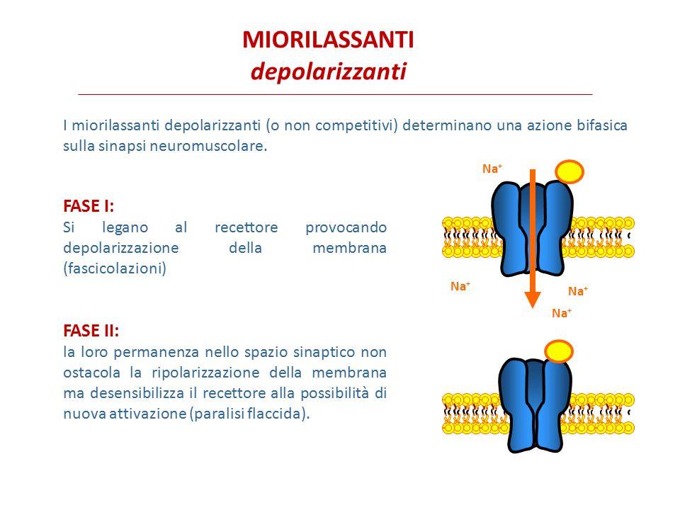 Il suxametonio (succinilcolina) è il miorilassante ad azione più rapida ed è ideale quando siano necessari una rapida insorgenza degli effetti e una breve durata d'azione, per esempio nell'intubazione tracheale.