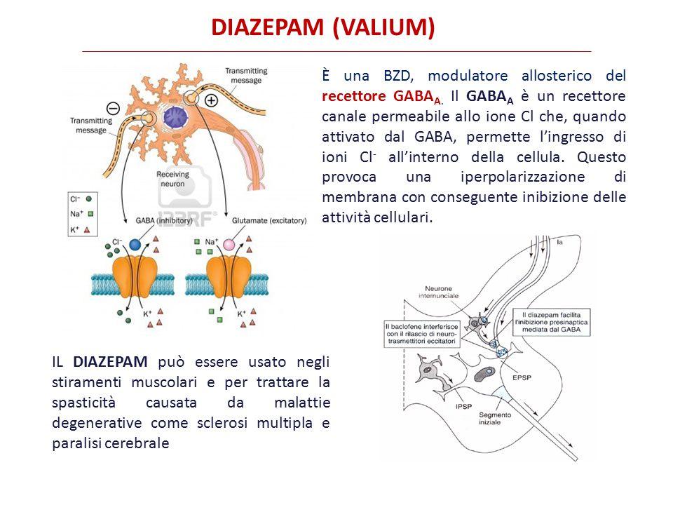 DANTROLENE (DANTRIUM) Agisce direttamente sulle cellule muscolari inibendo la liberazione del Ca ++ dal reticolo sarcoplasmatico per interazione con il recettore della rianodina (RYR) Esistono due principali isoforme di recettore per la rianodina.