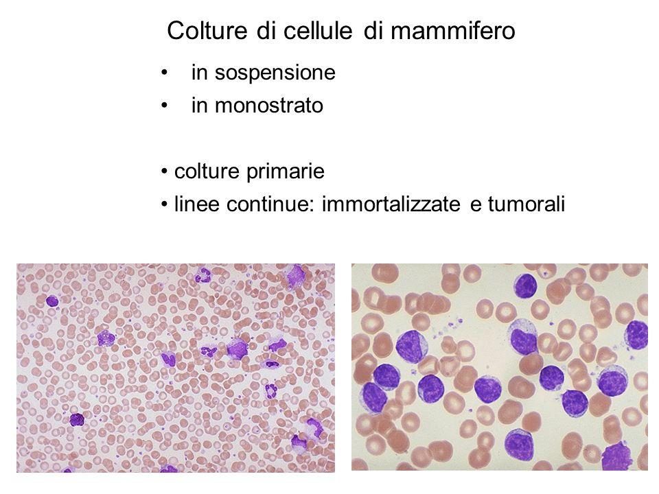 Colture di cellule di mammifero in sospensione in monostrato colture primarie linee continue: immortalizzate e tumorali