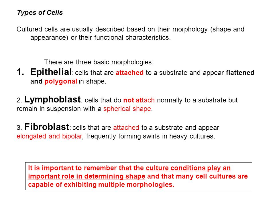 Types of Cells Cultured cells are usually described based on their morphology (shape and appearance) or their functional characteristics.