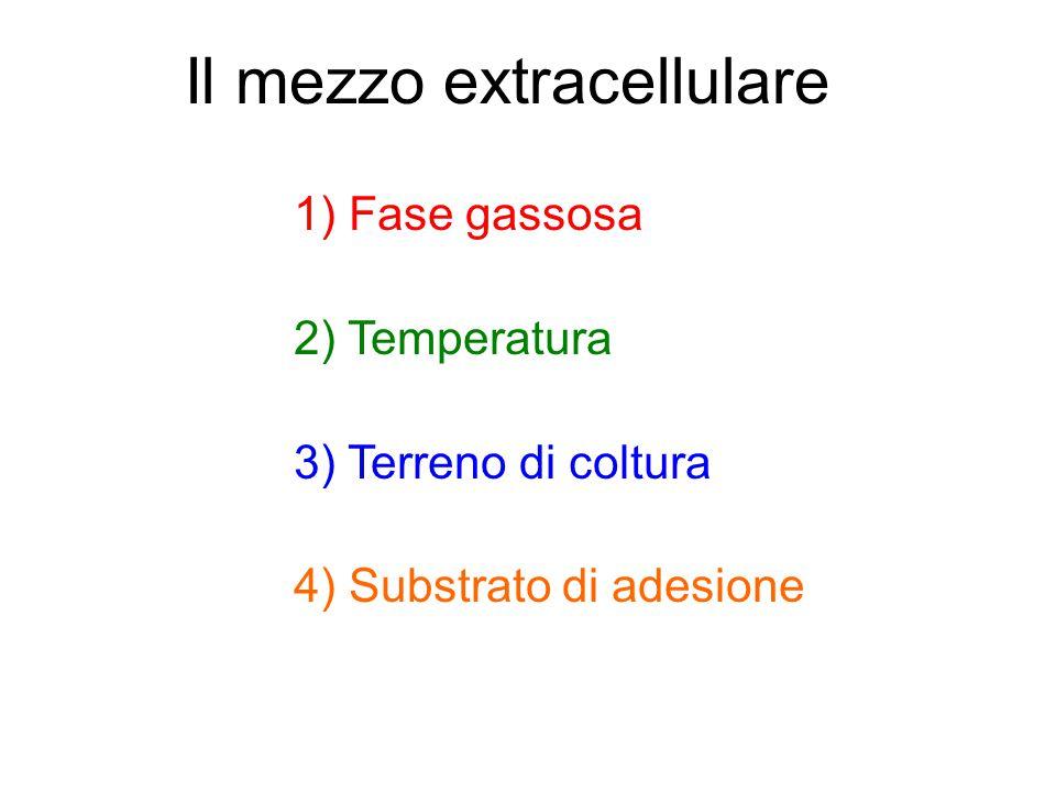Il mezzo extracellulare 1) Fase gassosa 2) Temperatura 3) Terreno di coltura 4) Substrato di adesione