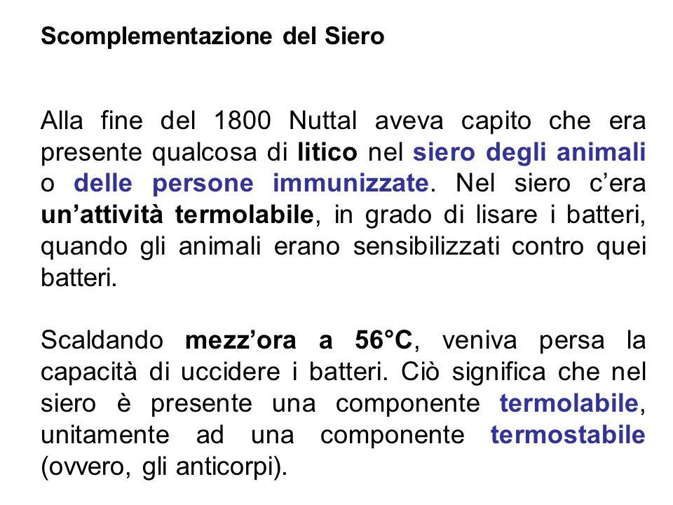 Scomplementazione del Siero Alla fine del 1800 Nuttal aveva capito che era presente qualcosa di litico nel siero degli animali o delle persone immuniz