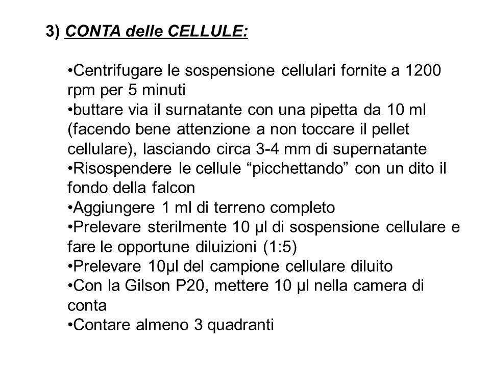 3) CONTA delle CELLULE: Centrifugare le sospensione cellulari fornite a 1200 rpm per 5 minuti buttare via il surnatante con una pipetta da 10 ml (face