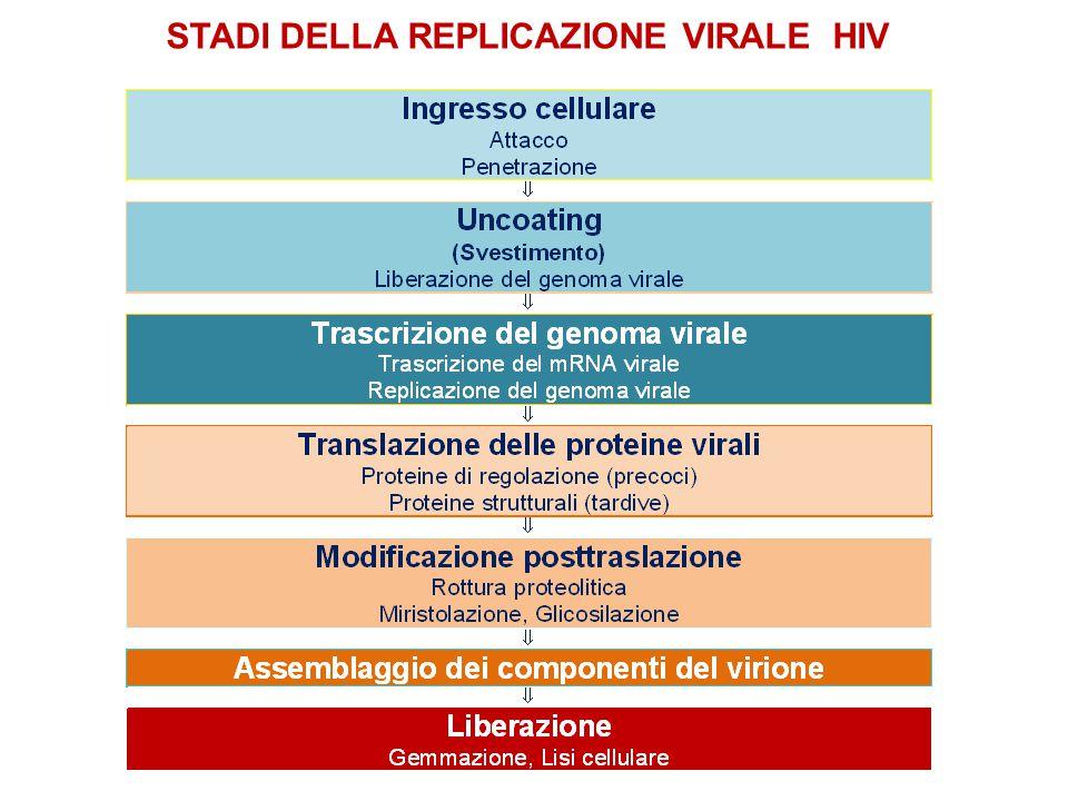 STADI DELLA REPLICAZIONE VIRALE HIV