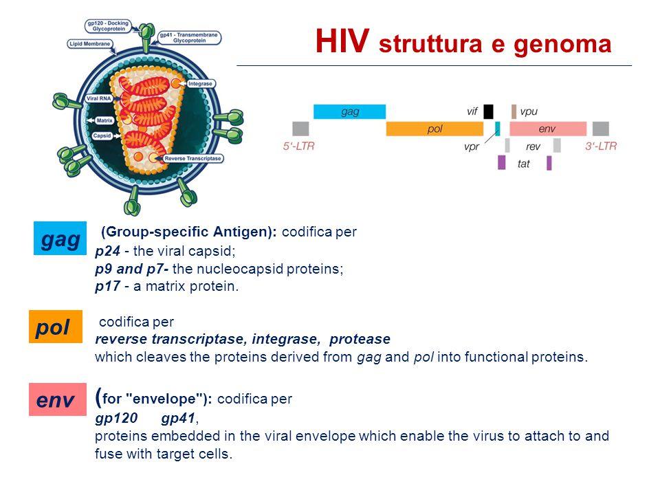  Sono state identificate 11 posizioni aminoacidiche residue della proteasi dell'HIV-1, la cui sostituzione è associata a resistenza.