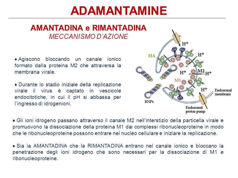 ADAMANTAMINE  Agiscono bloccando un canale ionico formato dalla proteina M2 che attraversa la membrana virale.