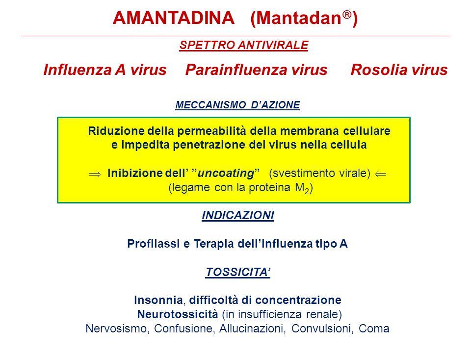SPETTRO ANTIVIRALE Influenza A virus Parainfluenza virus Rosolia virus MECCANISMO D'AZIONE Riduzione della permeabilità della membrana cellulare e impedita penetrazione del virus nella cellula  Inibizione dell' uncoating (svestimento virale)  (legame con la proteina M 2 ) INDICAZIONI Profilassi e Terapia dell'influenza tipo A TOSSICITA' Insonnia, difficoltà di concentrazione Neurotossicità (in insufficienza renale) Nervosismo, Confusione, Allucinazioni, Convulsioni, Coma