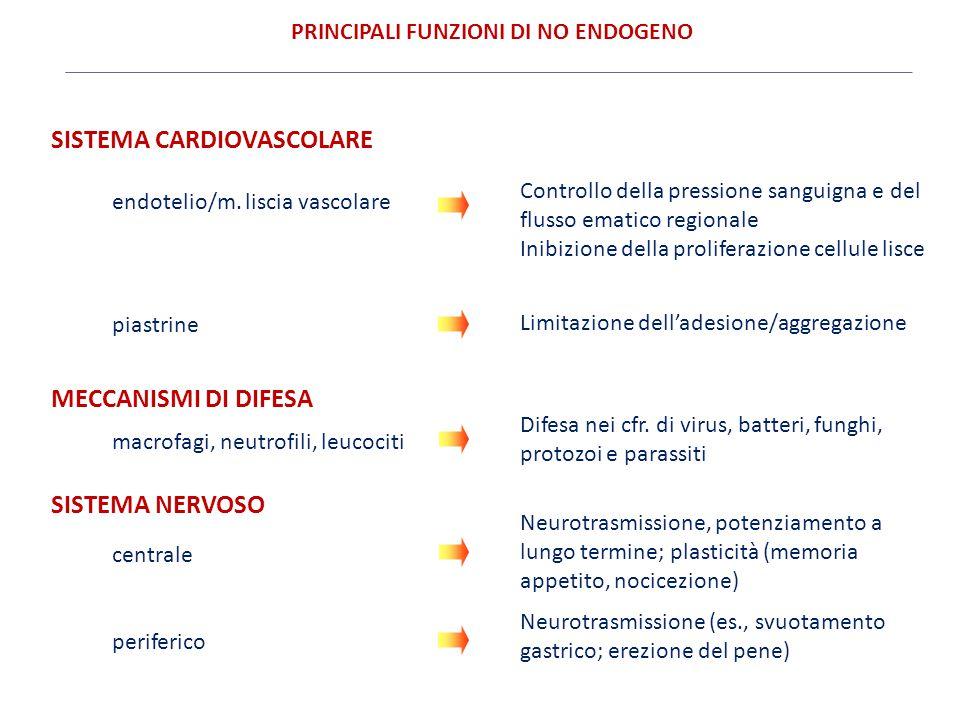 SISTEMA CARDIOVASCOLARE Controllo della pressione sanguigna e del flusso ematico regionale Inibizione della proliferazione cellule lisce piastrine Lim