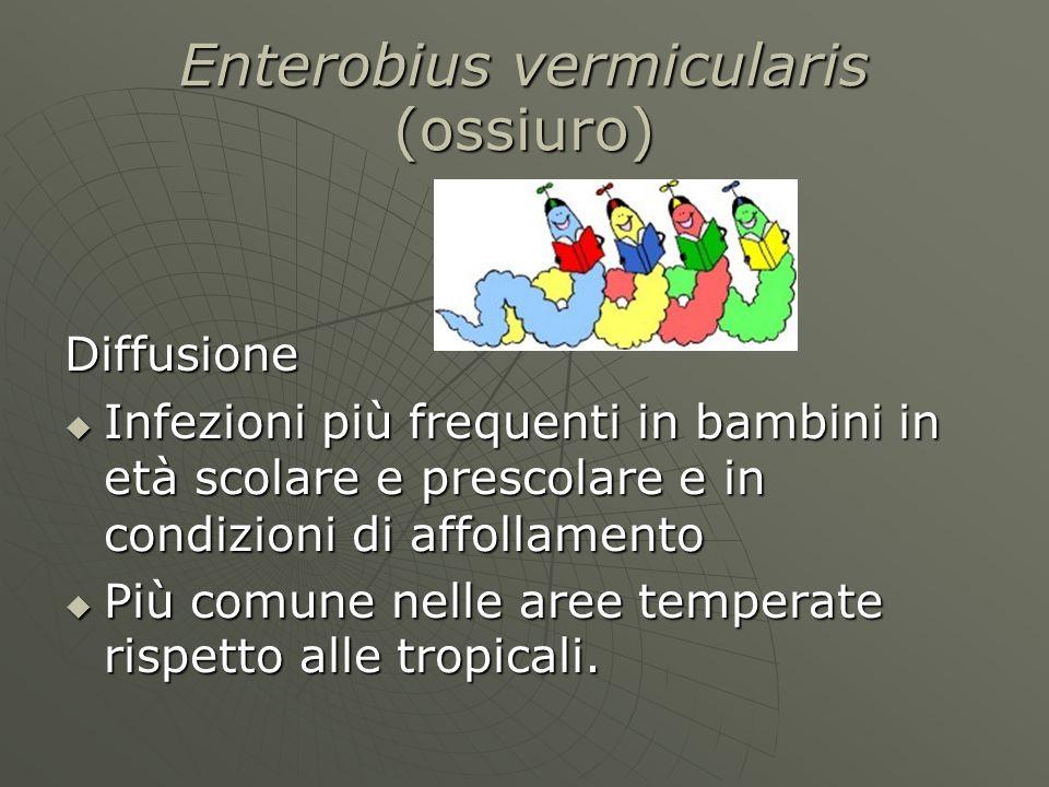 Enterobius vermicularis (ossiuro)  Diffusione  Infezioni più frequenti in bambini in età scolare e prescolare e in condizioni di affollamento  Più