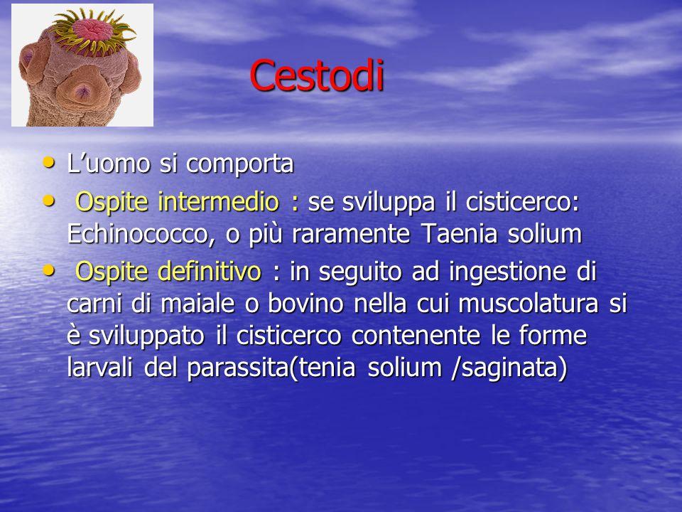 Cestodi Cestodi L'uomo si comporta L'uomo si comporta Ospite intermedio : se sviluppa il cisticerco: Echinococco, o più raramente Taenia solium Ospite
