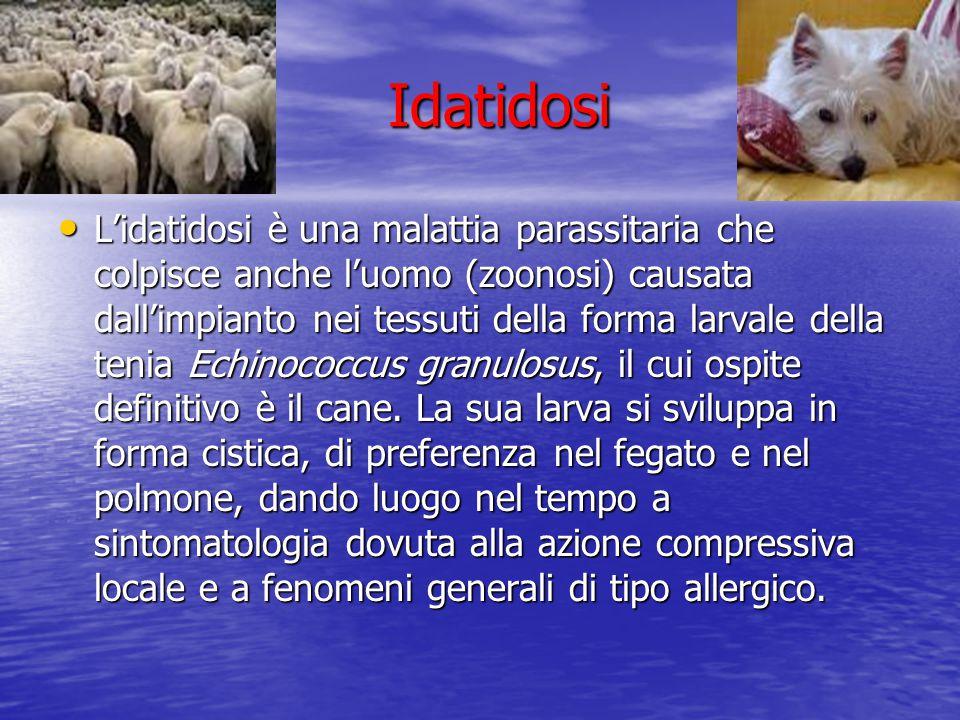 Idatidosi Idatidosi L'idatidosi è una malattia parassitaria che colpisce anche l'uomo (zoonosi) causata dall'impianto nei tessuti della forma larvale