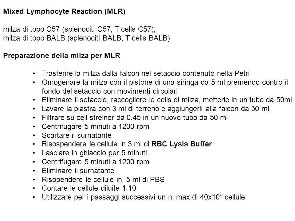 Mixed Lymphocyte Reaction (MLR) milza di topo C57 (splenociti C57, T cells C57); milza di topo BALB (splenociti BALB, T cells BALB) Preparazione della