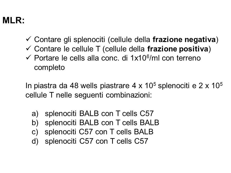 MLR: Contare gli splenociti (cellule della frazione negativa) Contare le cellule T (cellule della frazione positiva) Portare le cells alla conc. di 1x