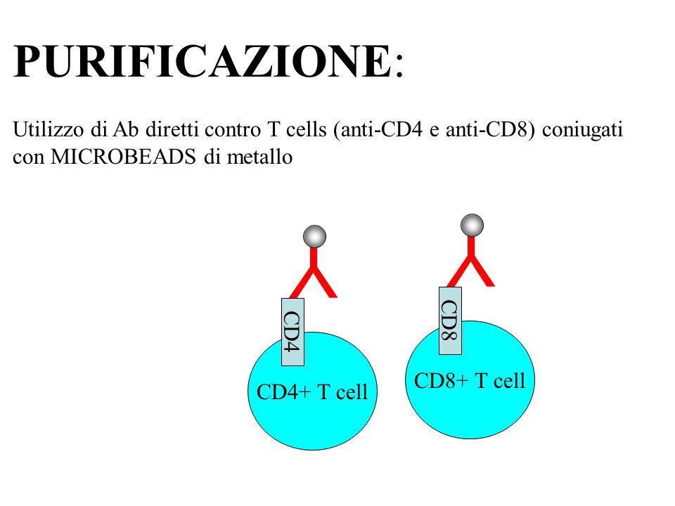 PURIFICAZIONE: Utilizzo di Ab diretti contro T cells (anti-CD4 e anti-CD8) coniugati con MICROBEADS di metallo Y CD4+ T cell CD4 Y CD8+ T cell CD8
