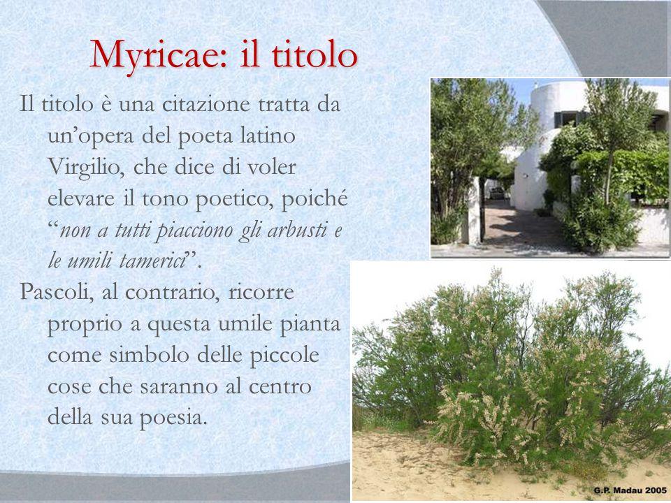 Myricae: il titolo Il titolo è una citazione tratta da un'opera del poeta latino Virgilio, che dice di voler elevare il tono poetico, poiché non a tutti piacciono gli arbusti e le umili tamerici .