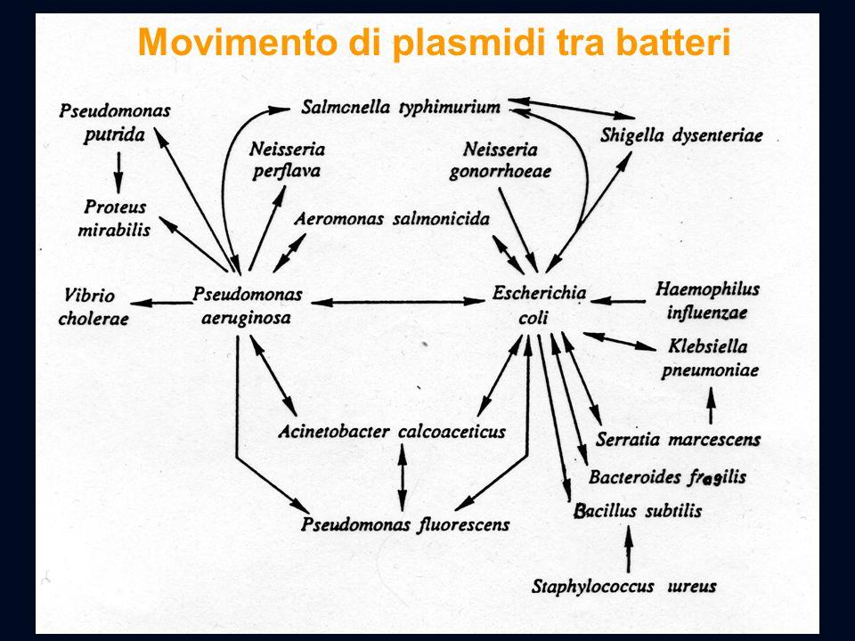 Movimento di plasmidi tra batteri
