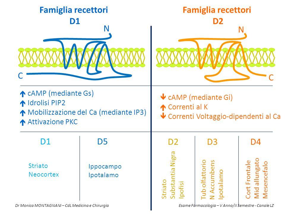 N N C C  cAMP (mediante Gs)  Idrolisi PIP2  Mobilizzazione del Ca (mediante IP3)  Attivazione PKC Famiglia recettori D2 Famiglia recettori D1  cA