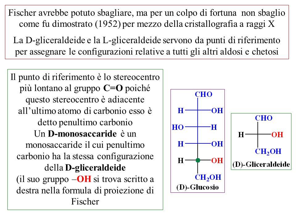 Fischer avrebbe potuto sbagliare, ma per un colpo di fortuna non sbaglio come fu dimostrato (1952) per mezzo della cristallografia a raggi X La D-glic