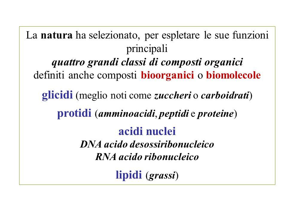 La natura ha selezionato, per espletare le sue funzioni principali quattro grandi classi di composti organici definiti anche composti bioorganici o bi