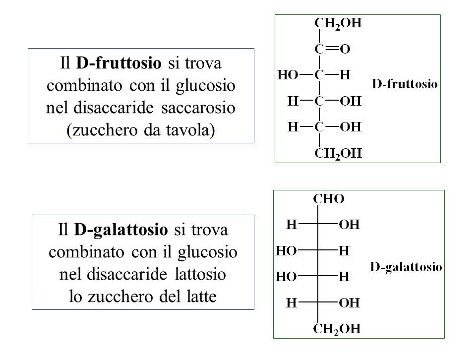 Il D-fruttosio si trova combinato con il glucosio nel disaccaride saccarosio (zucchero da tavola) Il D-galattosio si trova combinato con il glucosio n