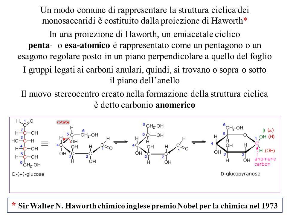 Un modo comune di rappresentare la struttura ciclica dei monosaccaridi è costituito dalla proiezione di Haworth* In una proiezione di Haworth, un emia