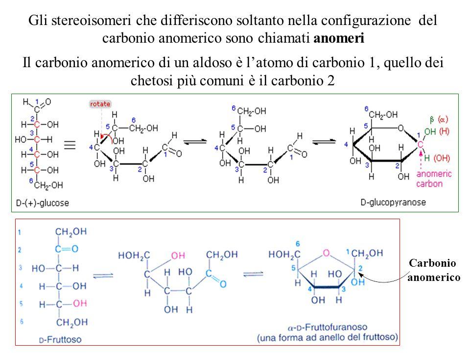 Gli stereoisomeri che differiscono soltanto nella configurazione del carbonio anomerico sono chiamati anomeri Il carbonio anomerico di un aldoso è l'a