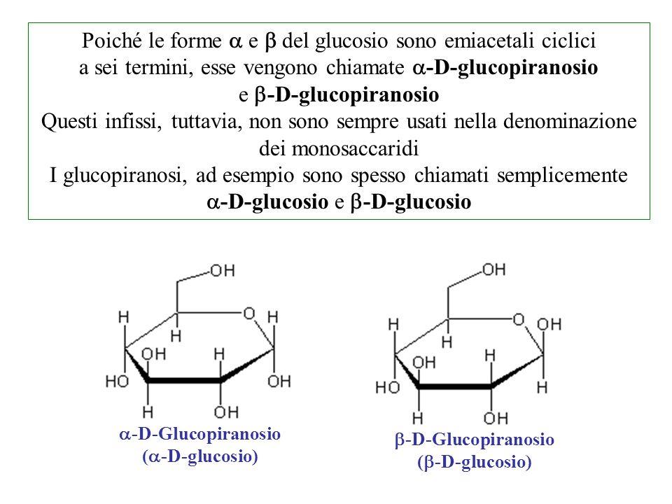  -D-Glucopiranosio (  -D-glucosio)  -D-Glucopiranosio (  -D-glucosio) Poiché le forme  e  del glucosio sono emiacetali ciclici a sei termini, es