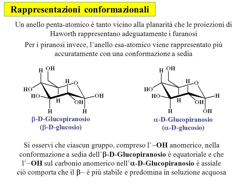 Rappresentazioni conformazionali  -D-Glucopiranosio (  -D-glucosio)  -D-Glucopiranosio (  -D-glucosio) Un anello penta-atomico è tanto vicino alla