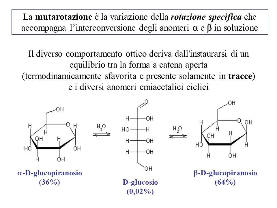 La mutarotazione è la variazione della rotazione specifica che accompagna l'interconversione degli anomeri  e  in soluzione Il diverso comportamento