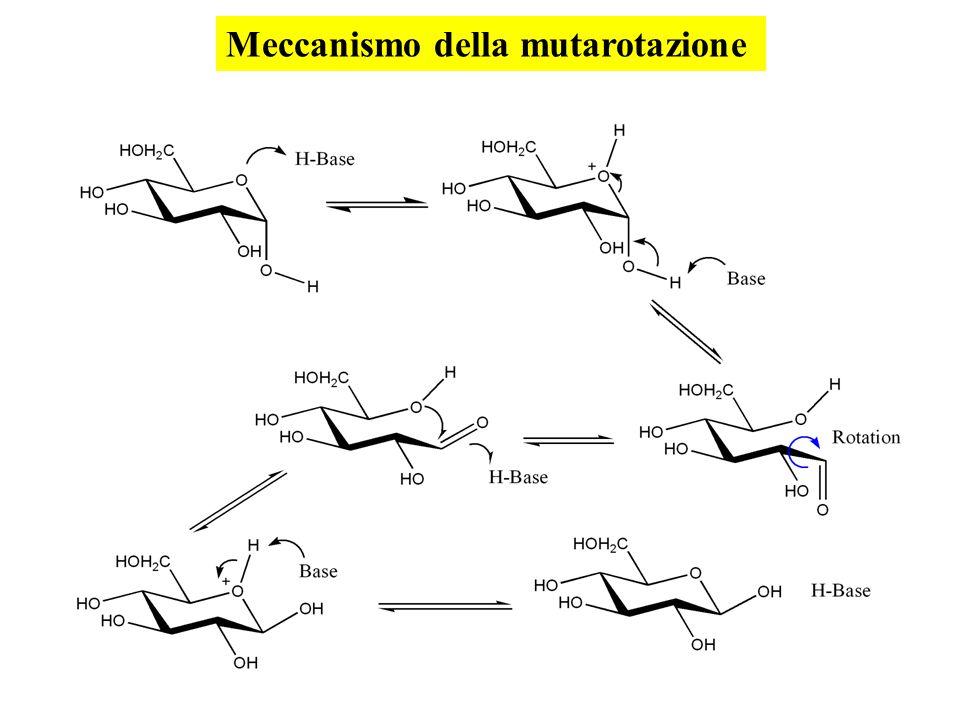 Meccanismo della mutarotazione