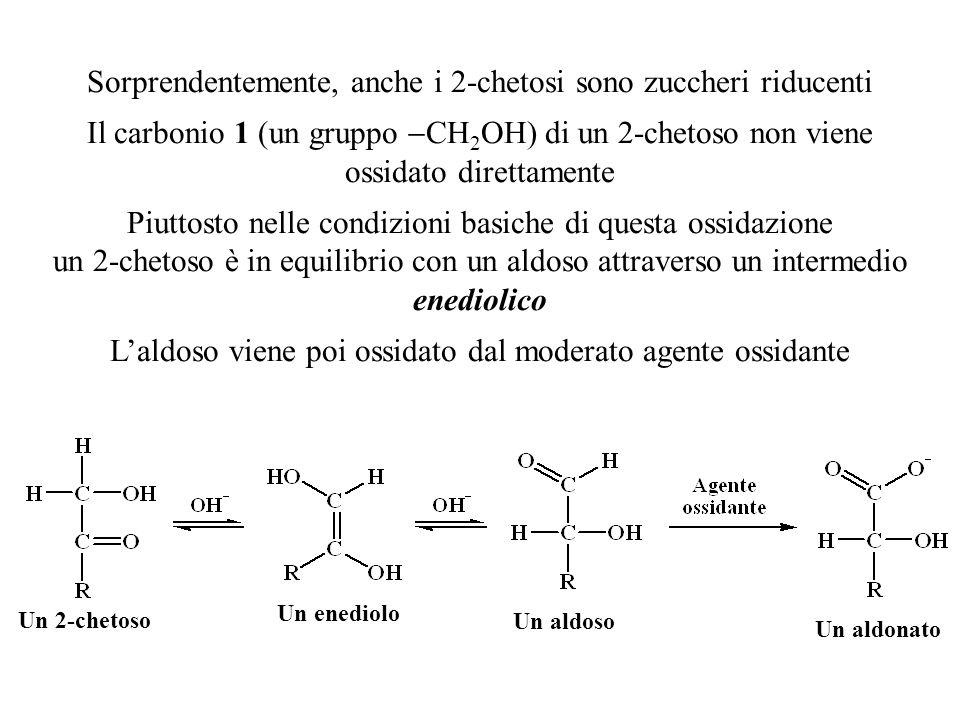 Sorprendentemente, anche i 2-chetosi sono zuccheri riducenti Il carbonio 1 (un gruppo  CH 2 OH) di un 2-chetoso non viene ossidato direttamente Piutt