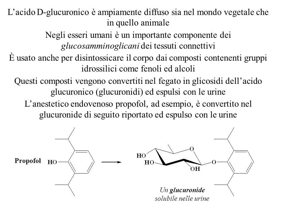 L'acido D-glucuronico è ampiamente diffuso sia nel mondo vegetale che in quello animale Negli esseri umani è un importante componente dei glucosammino