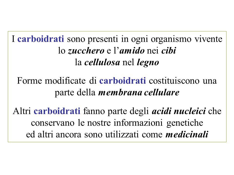 I carboidrati sono presenti in ogni organismo vivente lo zucchero e l'amido nei cibi la cellulosa nel legno Forme modificate di carboidrati costituisc