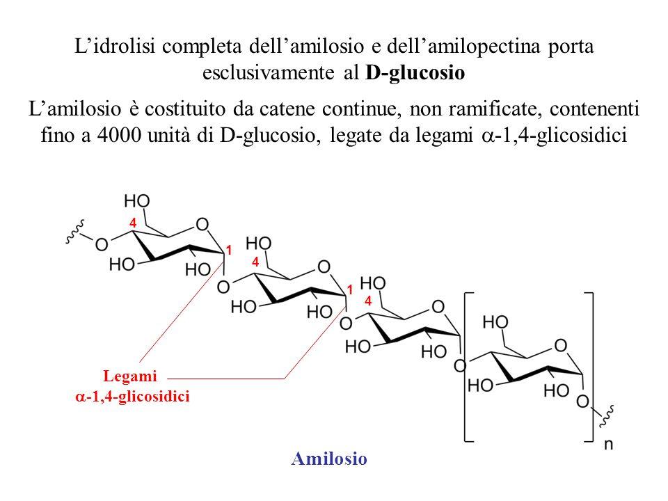 L'idrolisi completa dell'amilosio e dell'amilopectina porta esclusivamente al D-glucosio L'amilosio è costituito da catene continue, non ramificate, c