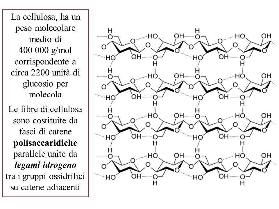La cellulosa, ha un peso molecolare medio di 400 000 g/mol corrispondente a circa 2200 unità di glucosio per molecola Le fibre di cellulosa sono costi