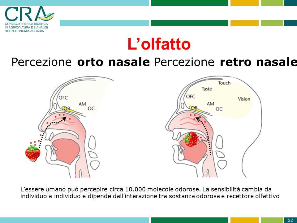 22 Percezione orto nasalePercezione retro nasale L'essere umano può percepire circa 10.000 molecole odorose. La sensibilità cambia da individuo a indi
