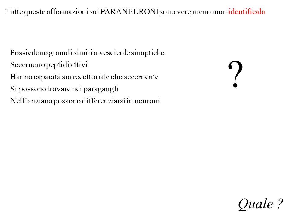 Tutte queste affermazioni sui PARANEURONI sono vere meno una: identificala Possiedono granuli simili a vescicole sinaptiche Secernono peptidi attivi H