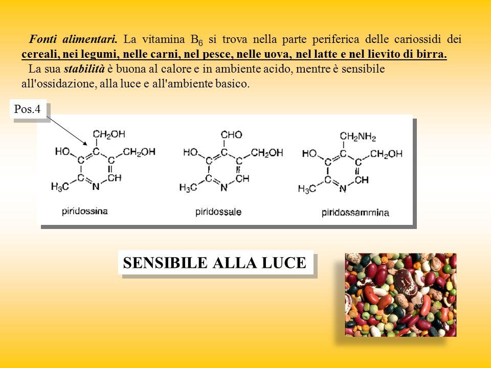 Fonti alimentari. La vitamina B 6 si trova nella parte periferica delle cariossidi dei cereali, nei legumi, nelle carni, nel pesce, nelle uova, nel la