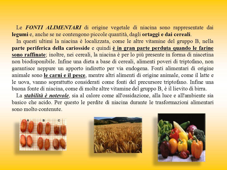 Le FONTI ALIMENTARI di origine vegetale di niacina sono rappresentate dai legumi e, anche se ne contengono piccole quantità, dagli ortaggi e dai cerea
