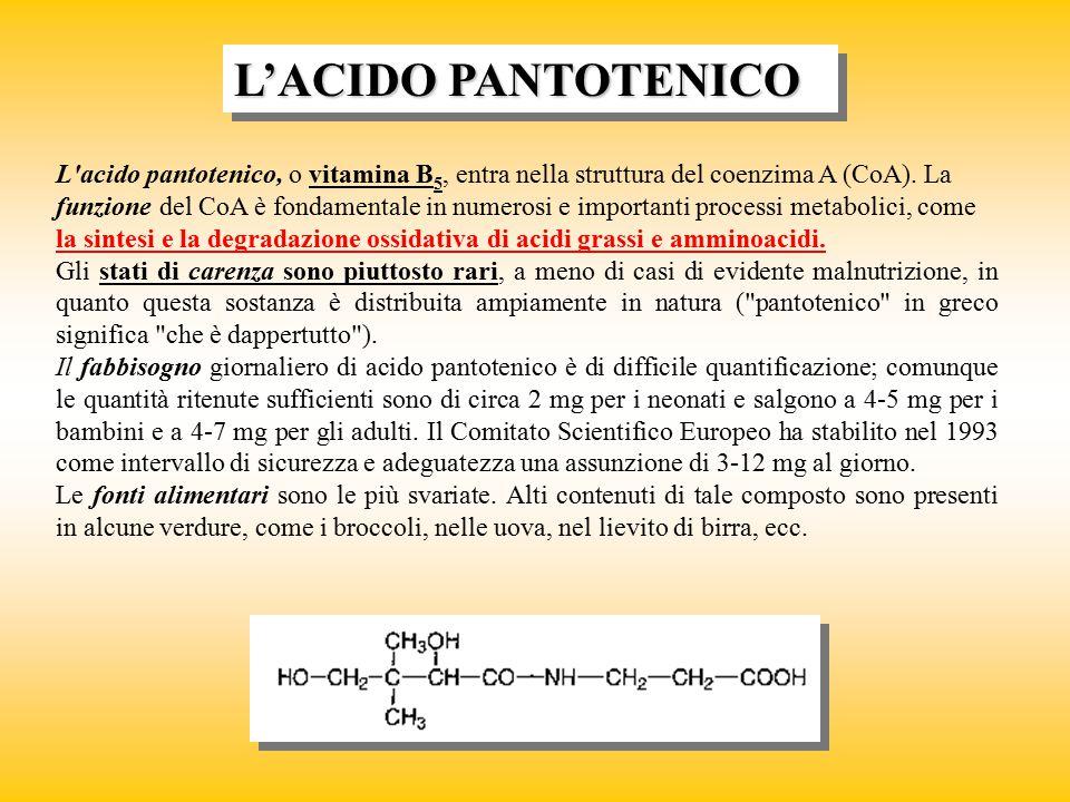 L'acido pantotenico, o vitamina B 5, entra nella struttura del coenzima A (CoA). La funzione del CoA è fondamentale in numerosi e importanti processi